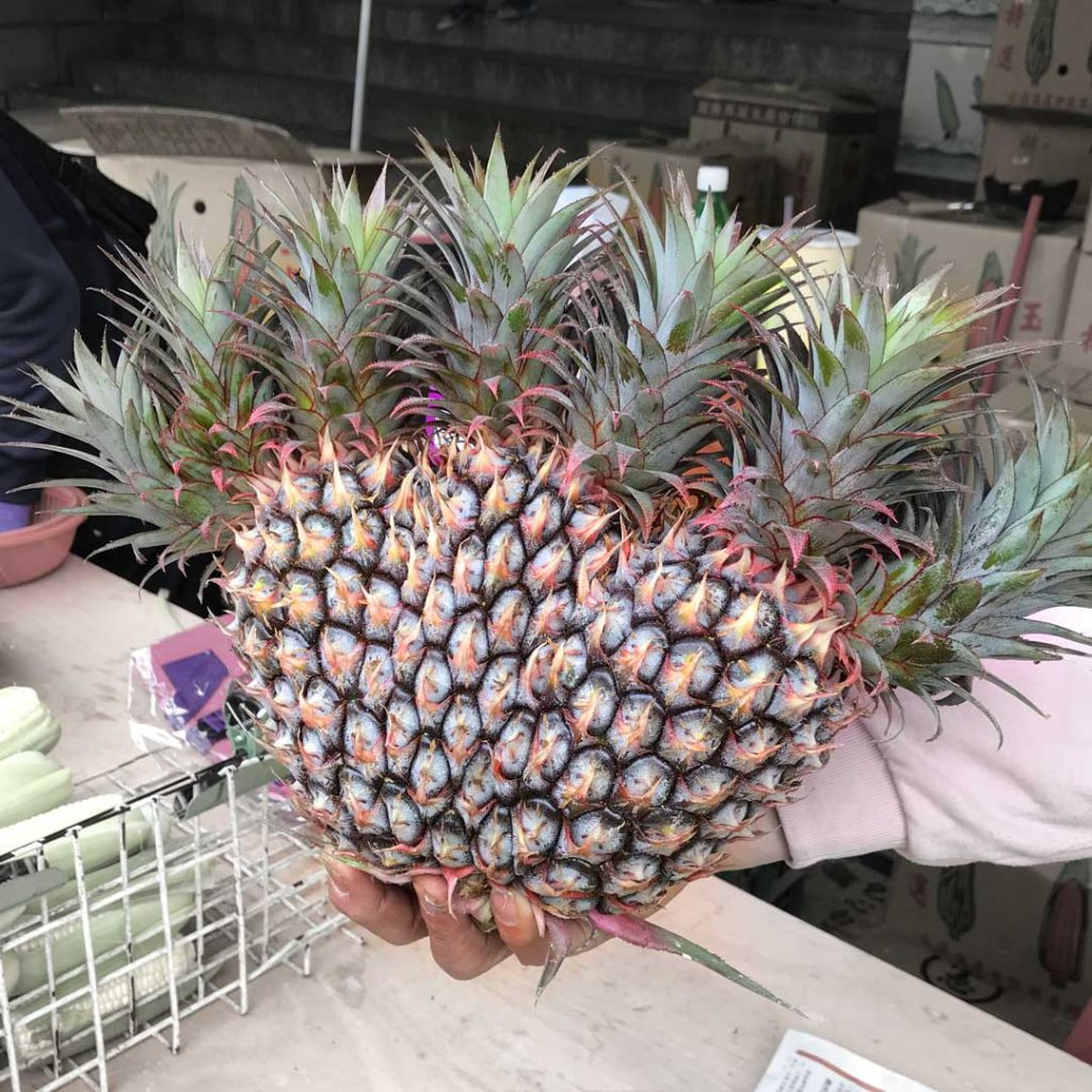 conjoined pineapples