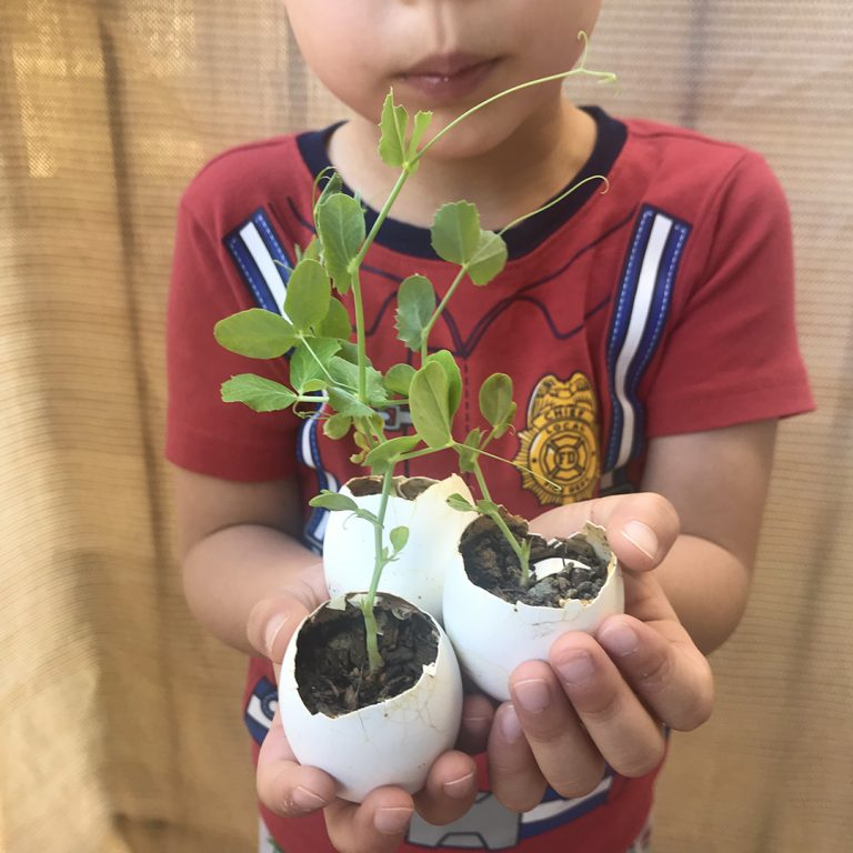 Growing Activities and Vocabulary