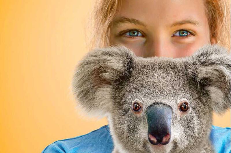 Izzy's Koala World available on Netflix in Mandarin
