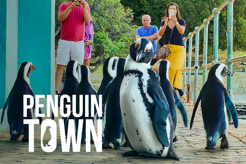 Penguin Town on Netflix with Mandarin Audio