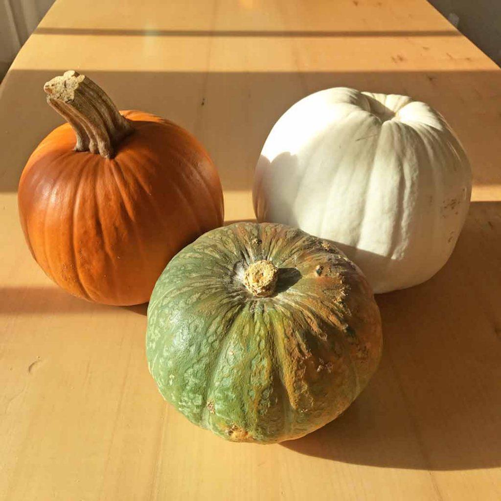 Best pumpkin for pie - pumpkins
